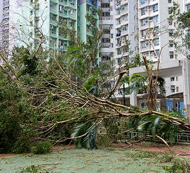 颱風襲港爆窗水浸 家居保險有保障
