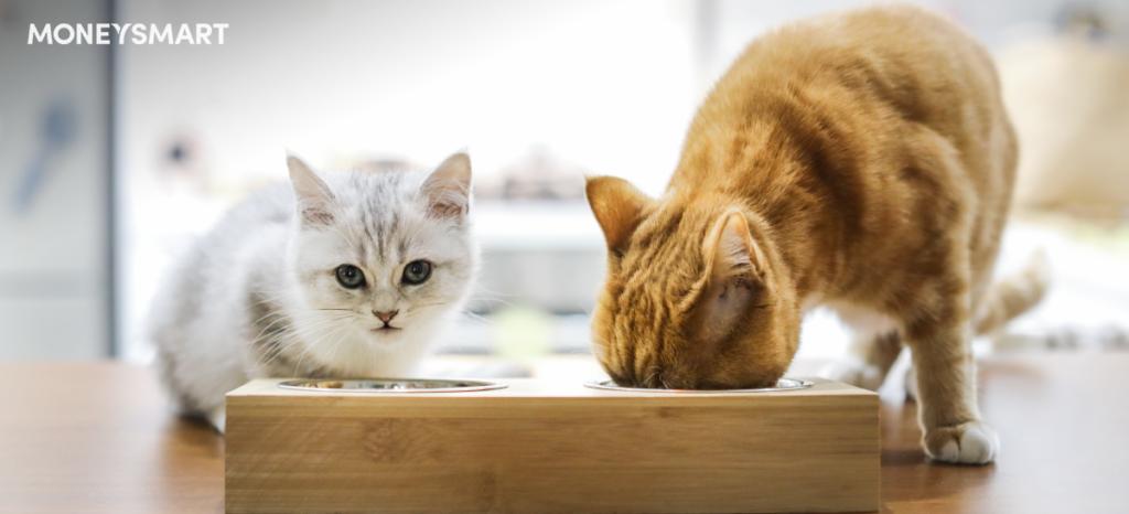 消委會貓糧貓罐頭濕糧營養比較